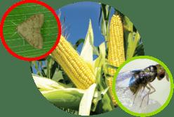 pest-solution