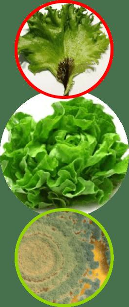 pest_solution